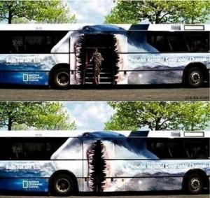 bus-shark